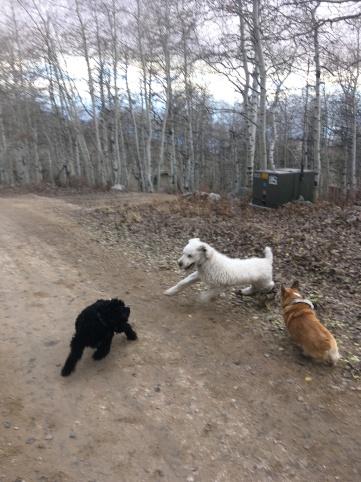 wild pups appeared on a neighborhood walk
