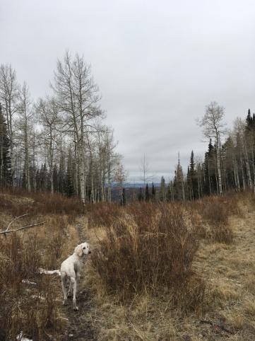 the moose trail. i love my neighborhood